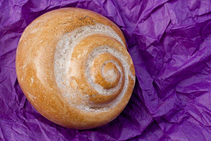Fossil gastropod