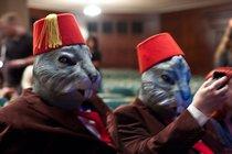 Fez Rabbits