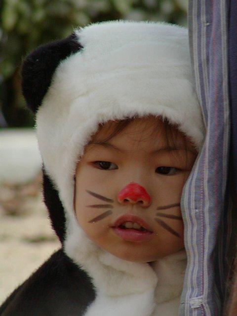 Black and White Cat, or Panda?