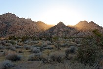 Late afternoon sun in Joshua Tree National Park, California