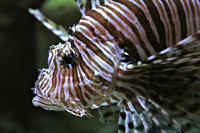 bonne nuit dans image bon nuit, jour, dimanche etc. Lionfish-m