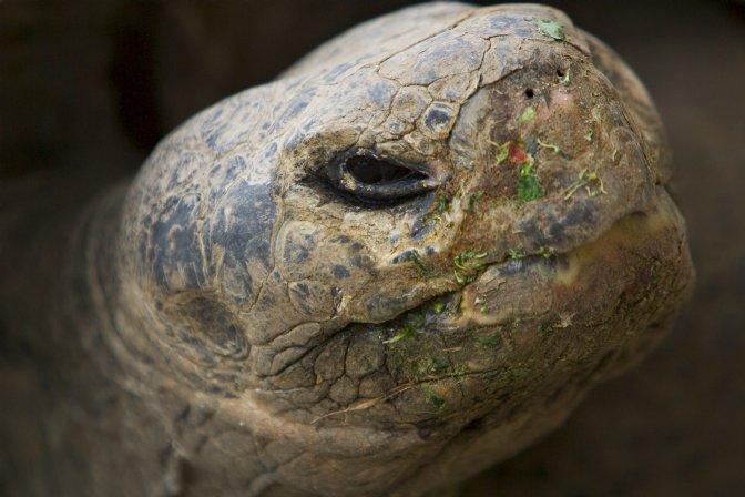 Tartarughe tutto ci che ha a che fare con le for Vaschette tartarughe