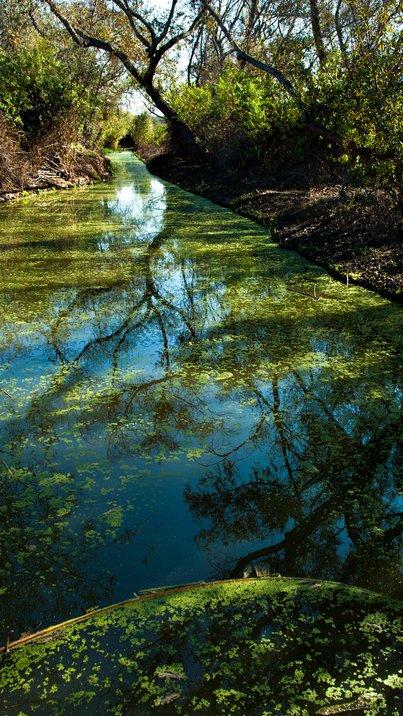 Algae-covered stream in San Joaquin Wildlife Sanctuary, Irvine, California