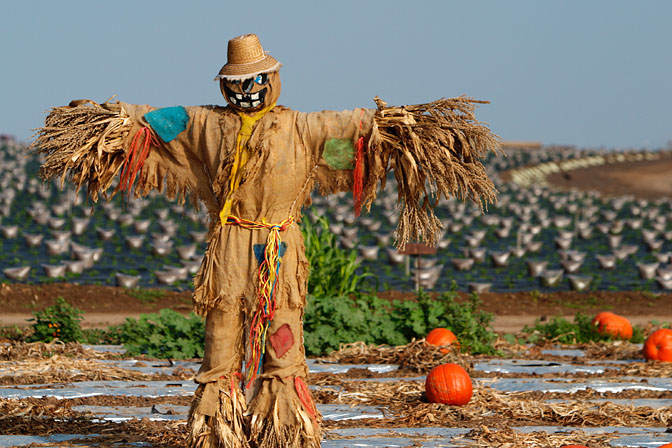 Scarecrows patchwork body writhed in