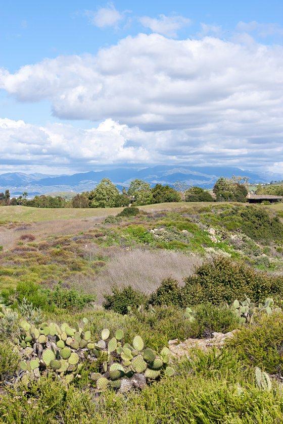 UCI Ecological Preserve