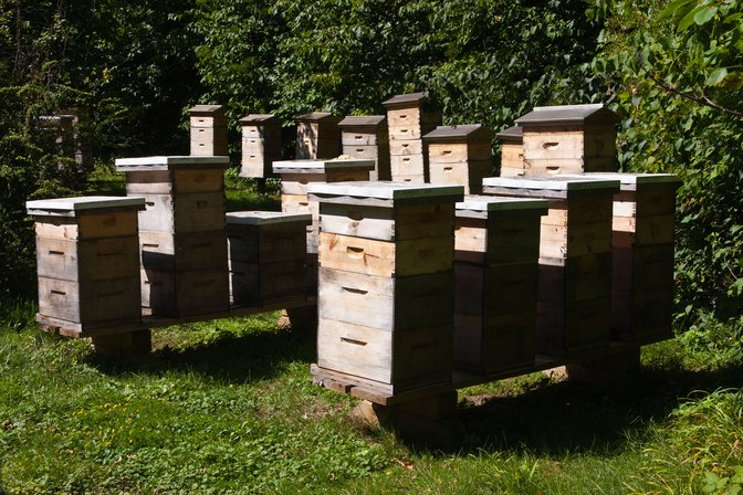 windermere manor beehives